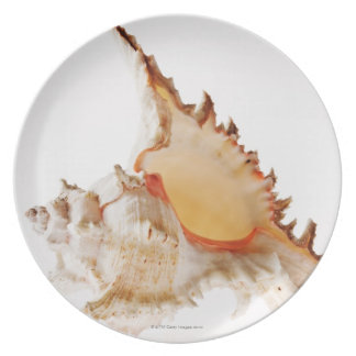 Ramose Murex (Chicoreus ramosus) shell against Plate