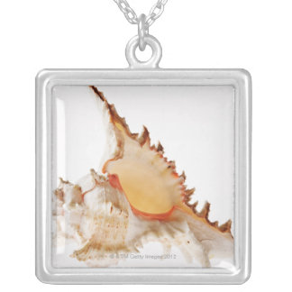 Ramose Murex (Chicoreus ramosus) shell against Silver Plated Necklace