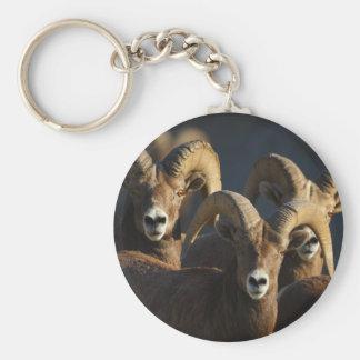 rams basic round button key ring