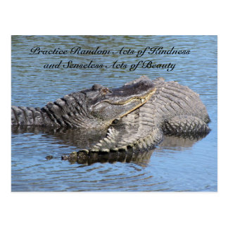 Random Acts of Kindness Postcard - Alligators