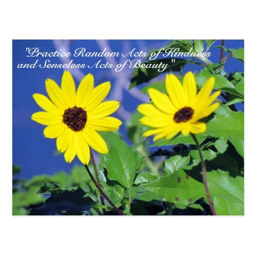 Random Acts of Kindness Postcard- Black Eyed Susan