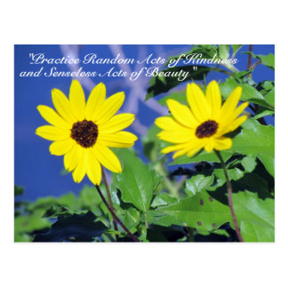Random Acts of Kindness Postcard- Black Eyed Susan Postcard