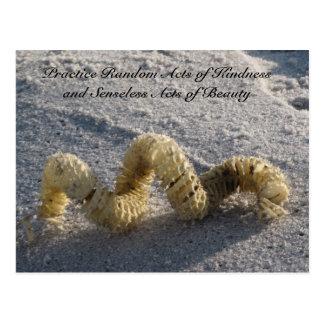 Random Acts of Kindness Postcard - Conch / Beach