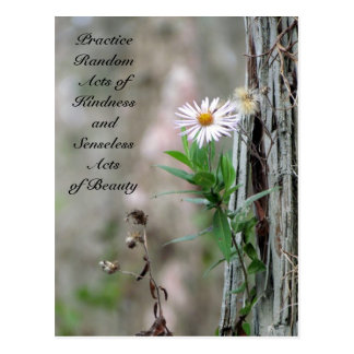 Random Acts of Kindness Postcard - Daisy