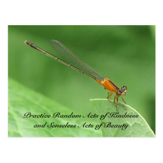 Random Acts of Kindness Postcard - Damselfly