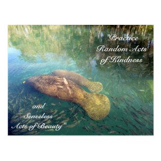 Random Acts of Kindness Postcard- Manatee Postcard