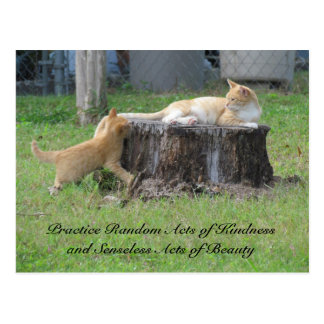 Random Acts of Kindness Postcard - Momma Kitty
