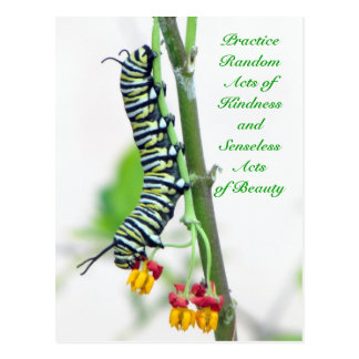 Random Acts of Kindness Postcard - Monarch Caterpi