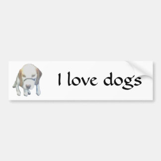 Random Labrador Dog copy, I love labradors Bumper Sticker