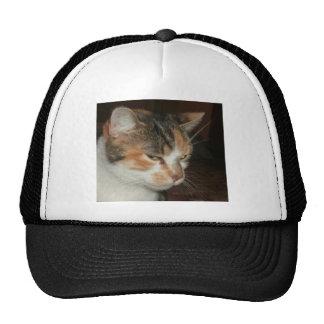 Random the Kitty Cap