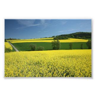 Rapeseed field near Bavenhausen, Germany Photo
