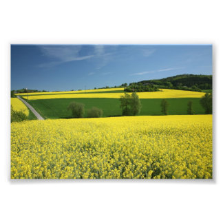 Rapeseed field near Bavenhausen, Germany Photo Print