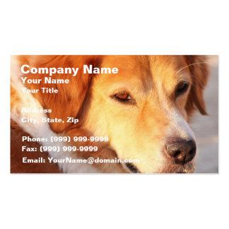 Rare Orange Dog Pack Of Standard Business Cards