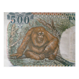 Rare Orangutan Money Postcard