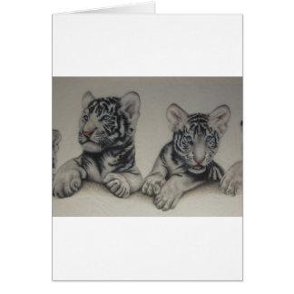Rare Pair  White Tiger Cubs Greeting Cards