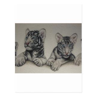 Rare Pair  White Tiger Cubs Postcard