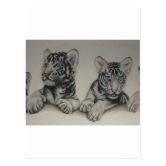 Rare Pair  White Tiger Cubs Postcard