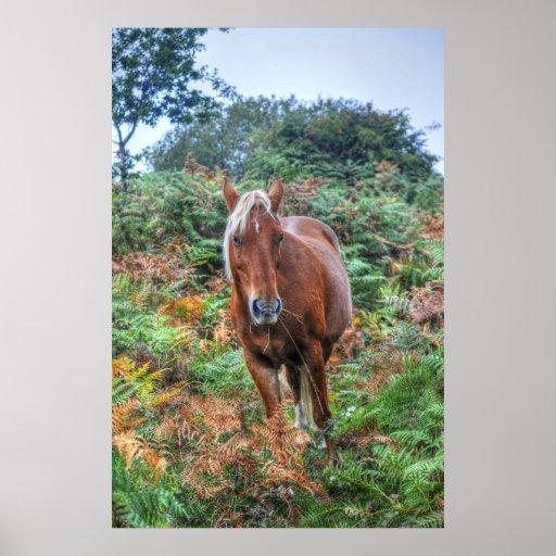 Rare Palomino New Forest Pony & Bracken - England Posters