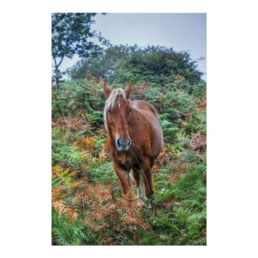 Rare Palomino New Forest Pony & Bracken - England Poster