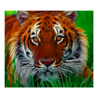 Rare Sumatran Tiger from Indonesia Poster