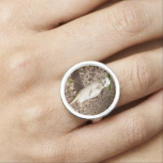 Rare White Fur Meerkat, Silver Round Ring.