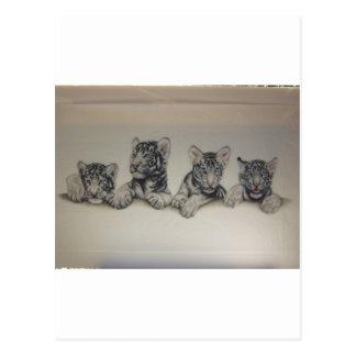 Rare White Tiger Cubs Postcards
