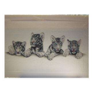 Rare White Tiger Cubs Postcard