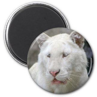 Rare White Tiger Magnet