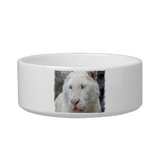 Rare White Tiger Pet Bowl