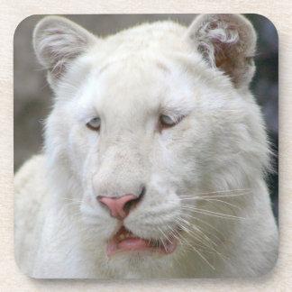 Rare White Tiger  Set of Coasters