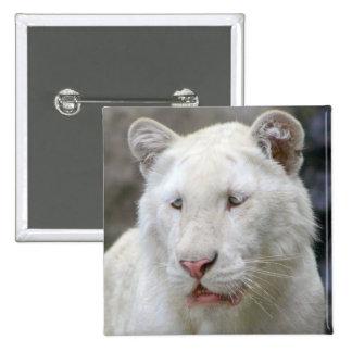 Rare White Tiger Square Pin