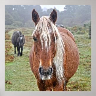 Rare Wild New Forest Palomino Pony England Print