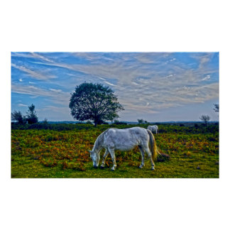 Rare Wild New Forest Ponies of Hampshire, England Poster