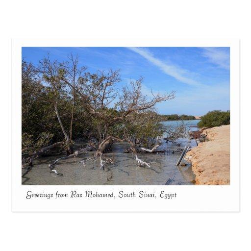 Ras Mohamed Nature Preserve Park, Sinai, Egypt Post Cards