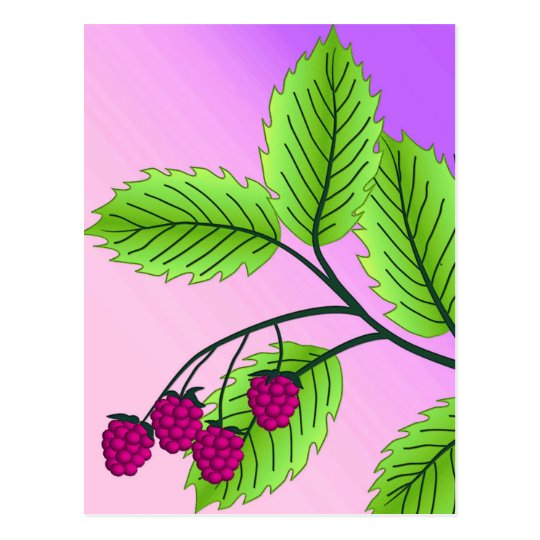 Raspberries on a branch postcard