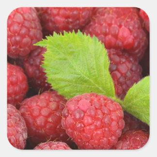 Raspberries Square Sticker