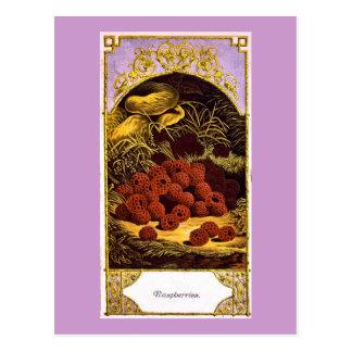 Raspberries - Vintage Ad 1874 Postcard