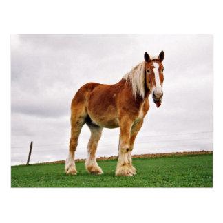 Raspberry Amish Horse Postcard