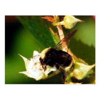 Raspberry Bee Postcard