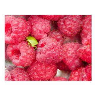 Raspberry bug postcard