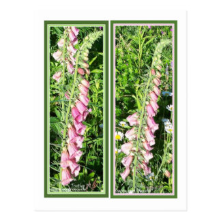 RASPBERRY FOXGLOVE BOOKMARKS POSTCARD