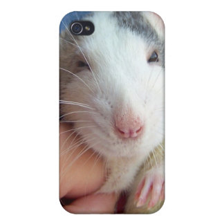 Rat iPhone Case iPhone 4 Cover