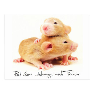 Rat Lover Always and Forever Postcard