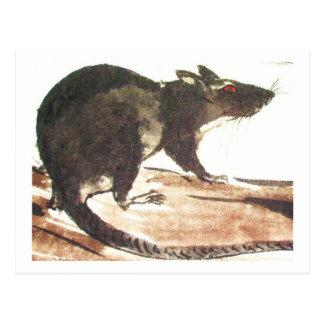 Rat No. 01 * advice * Ratten-Postkarten* advice ki Post Card