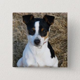 Rat Terrier 15 Cm Square Badge