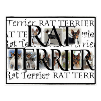 Rat Terrier Collage Postcard