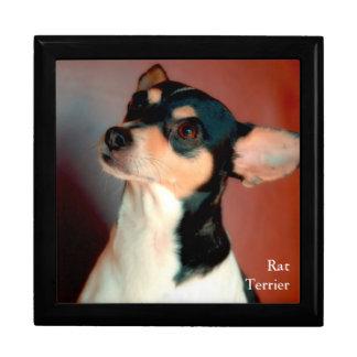 Rat Terrier Gift Box