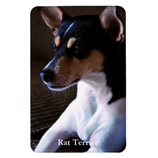 Rat Terrier Magnet
