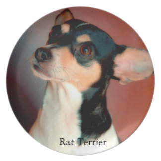Rat Terrier Plate
