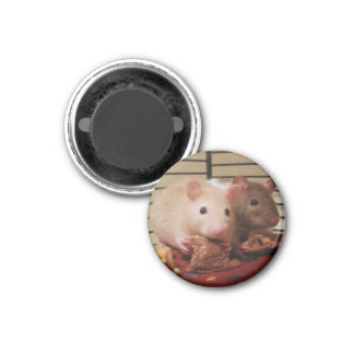 Rats eating peanut butter sandwiches magnet